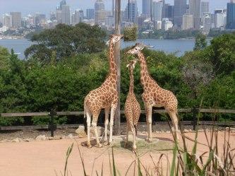 18 Taronga Zoo 1