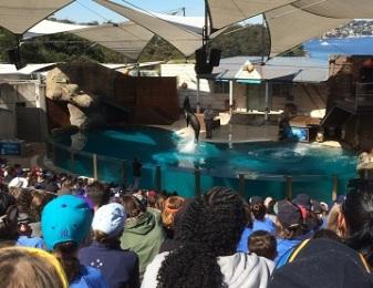 Seals at zoo